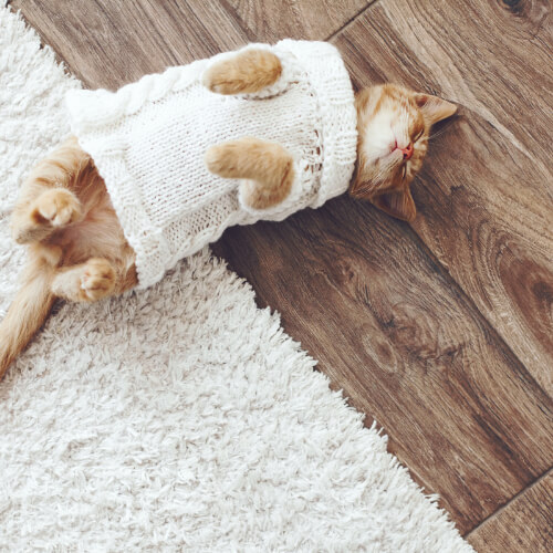 Pet friendly floor | Independent Floor Covering